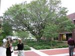 Outside the Alumni Center.